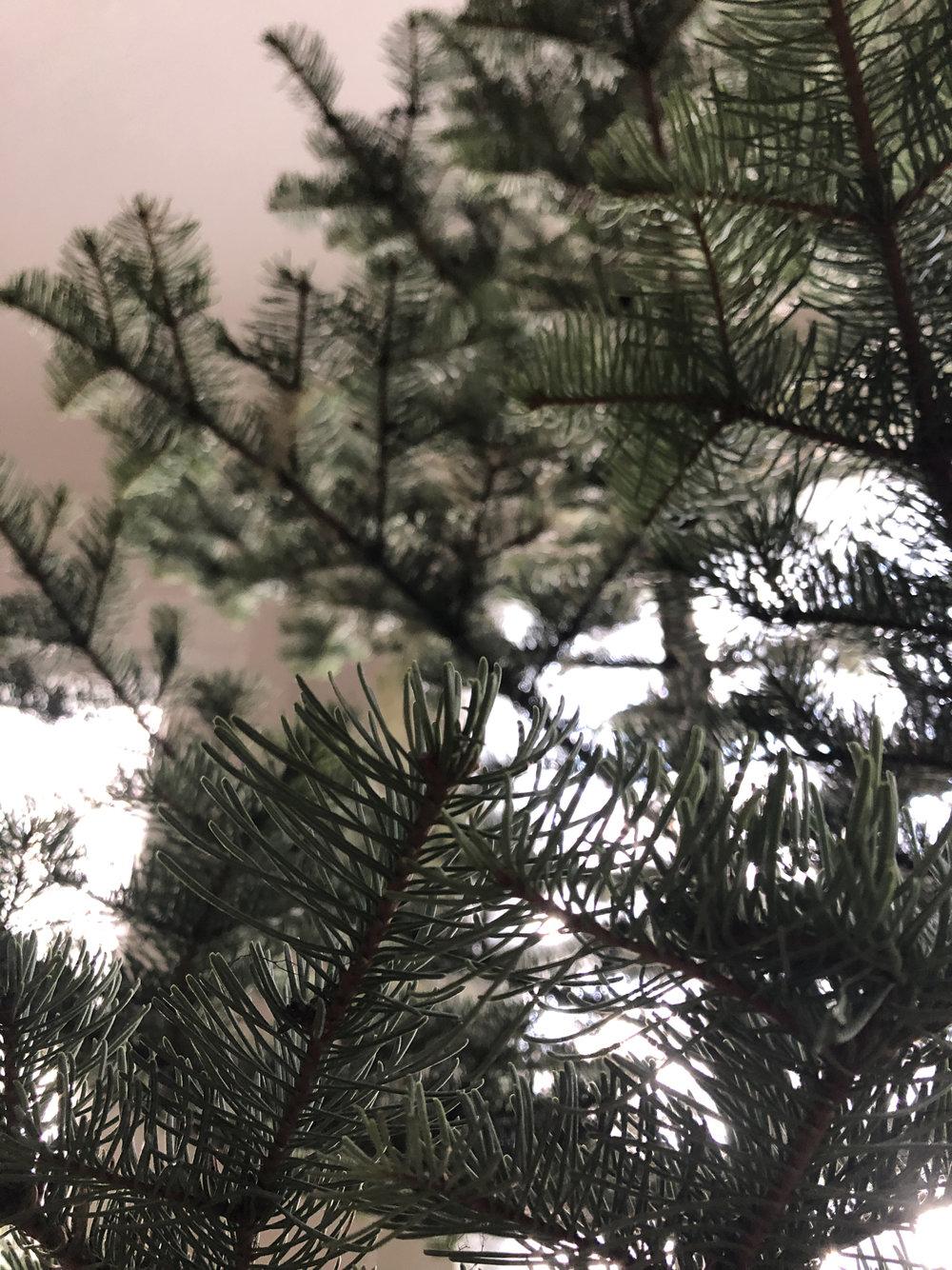 tree2018.jpg