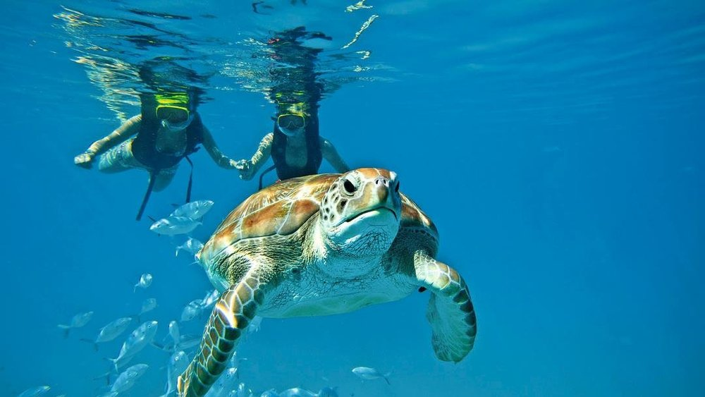Snorkeling - Experience a whole new world by snorkeling the Belize Barrier Reef. You won't believe the amazing things you can see underwater. Swim with turtles, view beautiful coral structures, and so much more!