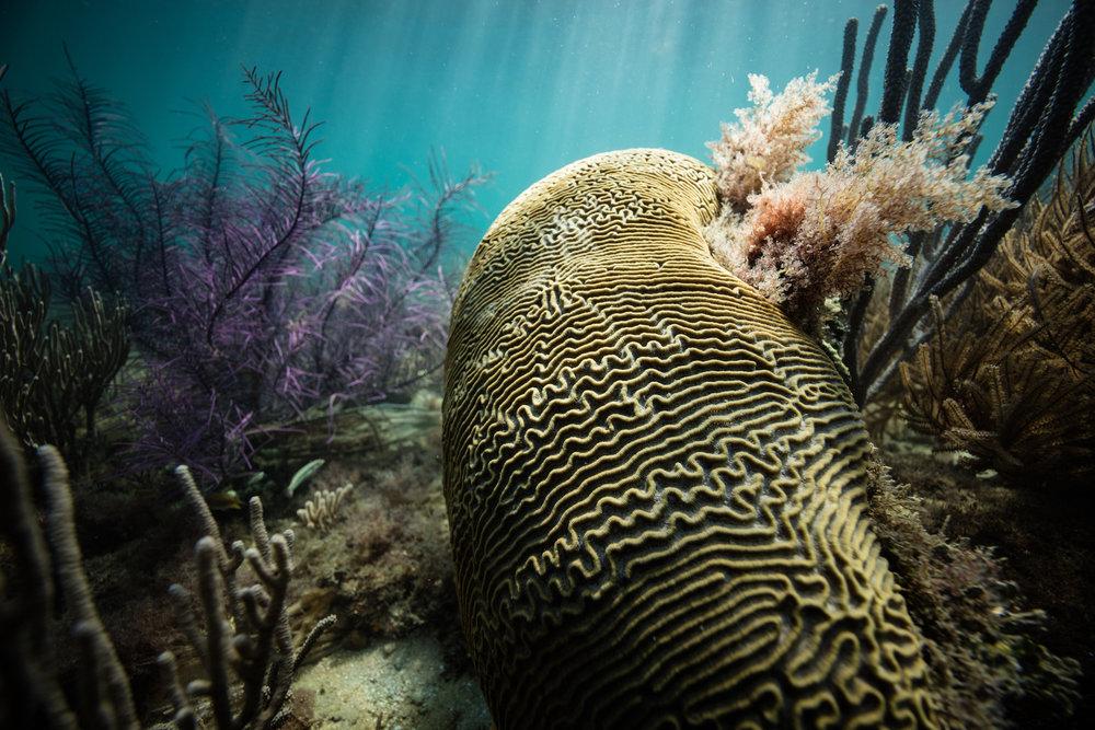 Belize Ocean Club-34.jpg