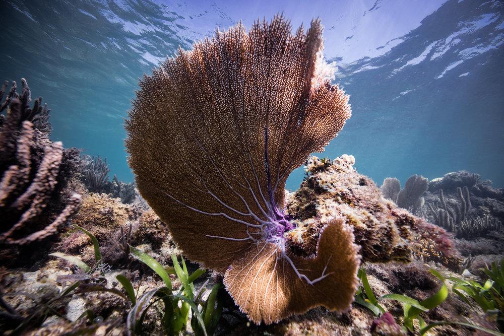 Belize Ocean Club-43.jpg