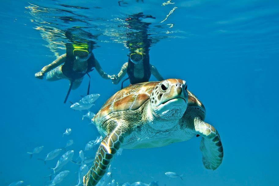 SCuba diving & snorkeling -