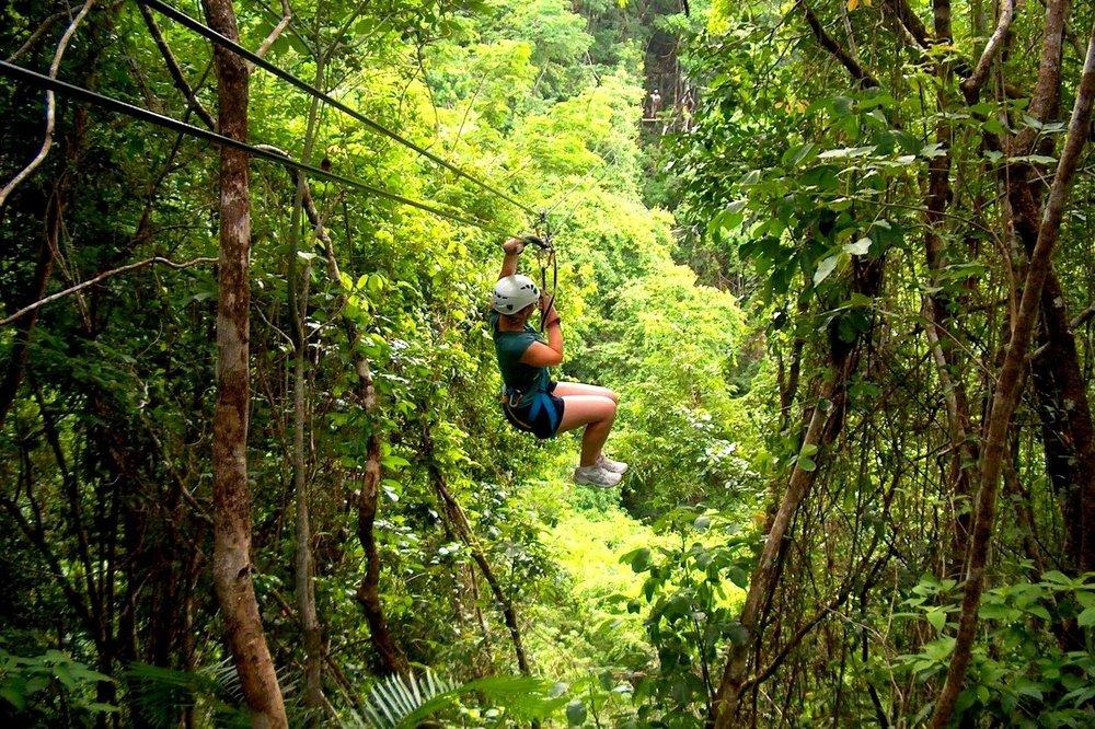 Jungle tours -