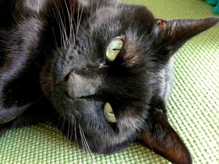 happycat3