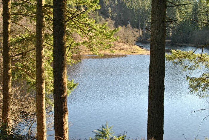 Kielder Water in Spring