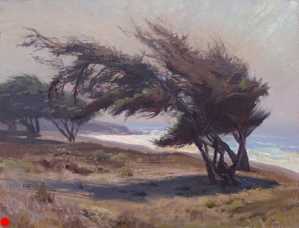 Windswept Cypress , 12 x 16 oil on panel Painted near San Simeon on the California coast. SOLD