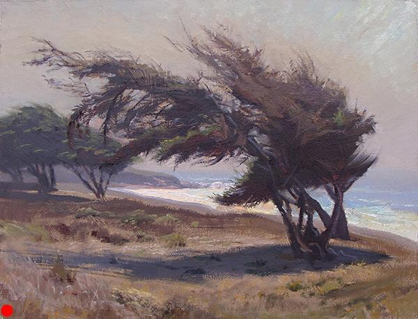 Windswept Cypress , 12 x 16 oil on panel Painted near San Simeon on the California coast. SOLD