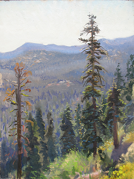 Sierra Nevada Pines 1 , 16 x 12 oil on panel