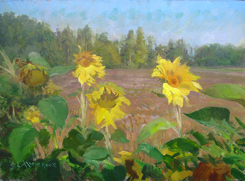 Sunflowers  12 x 16 oil on panel This is a slightly larger piece created in the studio from a smaller plein air painting done on location up near Grand Marais.