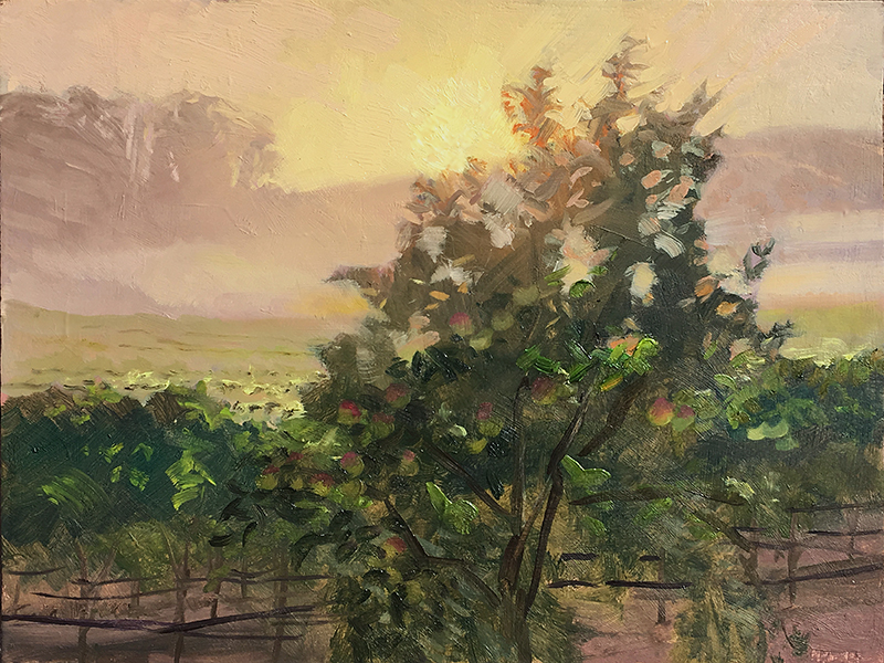 Misty Morning in Wine Country  12 x 16 oil on panel Painted on location at the Sonoma plein air event 2018.