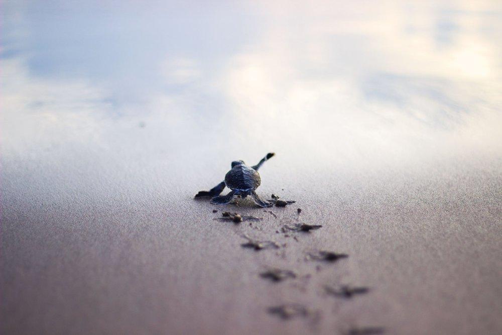 Guatemala Turtle Beach