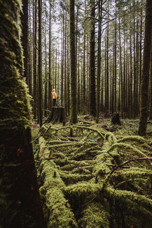 Image by Martina Gutfreund