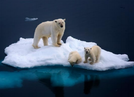 A stranded polar bear family, to far to other ice to swim.
