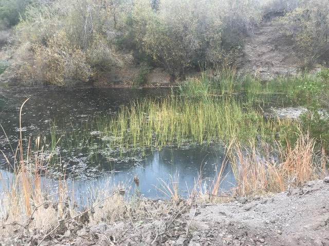 Catalina Pond 6.jpg