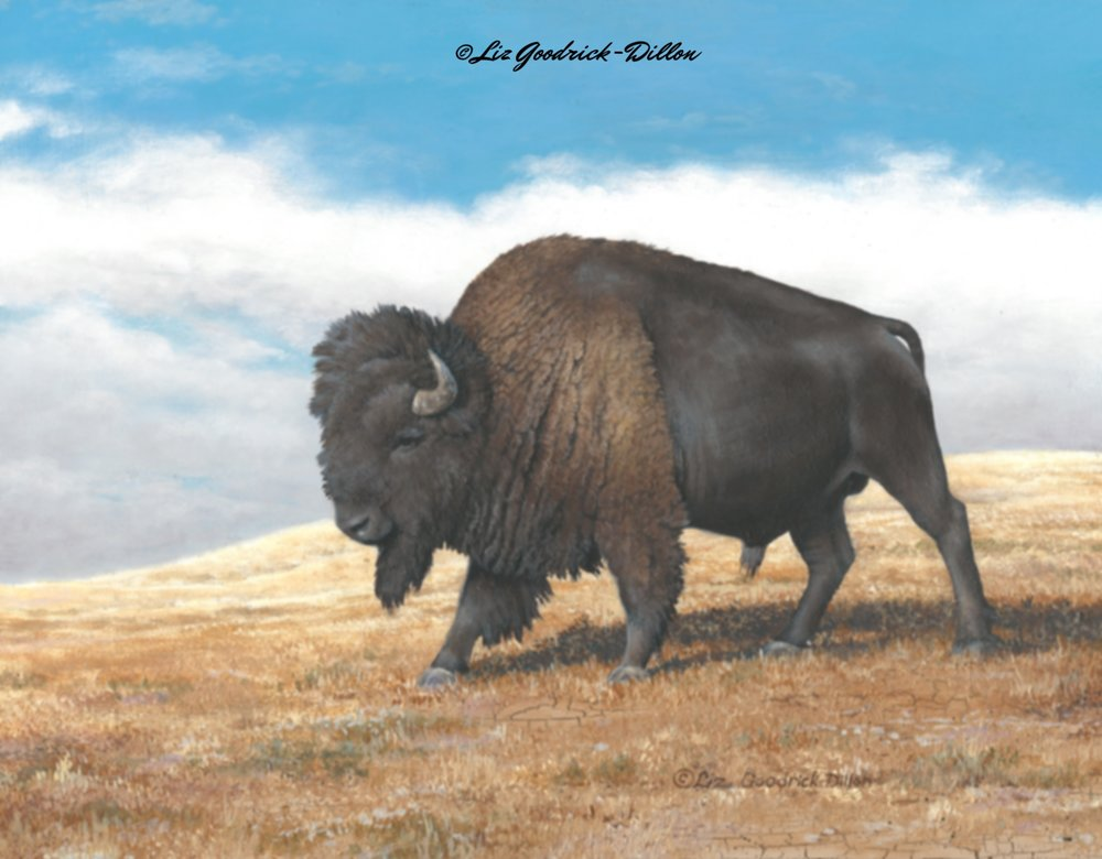Buffalo Bull on the Prarie