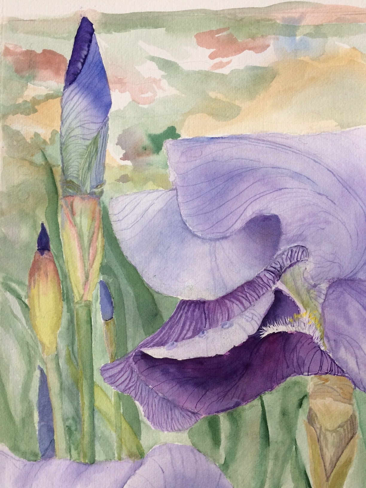 WHITE  PURPLE FLOWERS  DRAWN CHARCOAL SOFT  PASTEL RE PRINT ON FRAMED CANVAS