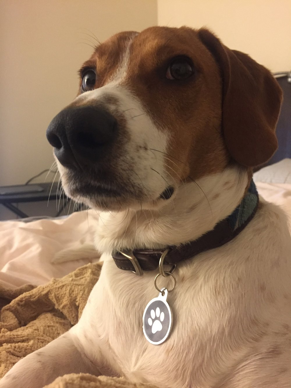 Oban- Scotland - Dog