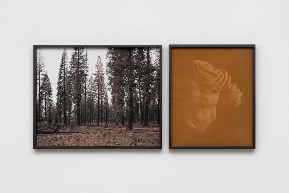 Actaeon in Eldorado   (dipytch), 2016 Left: Eldorado Inkjet print 22 x 28 inches  Right: Torso of Actaeon II Anthotype (faded amaranth and stinging nettle dyes on paper) 22 x 16 inches Ed: 3 + 2AP