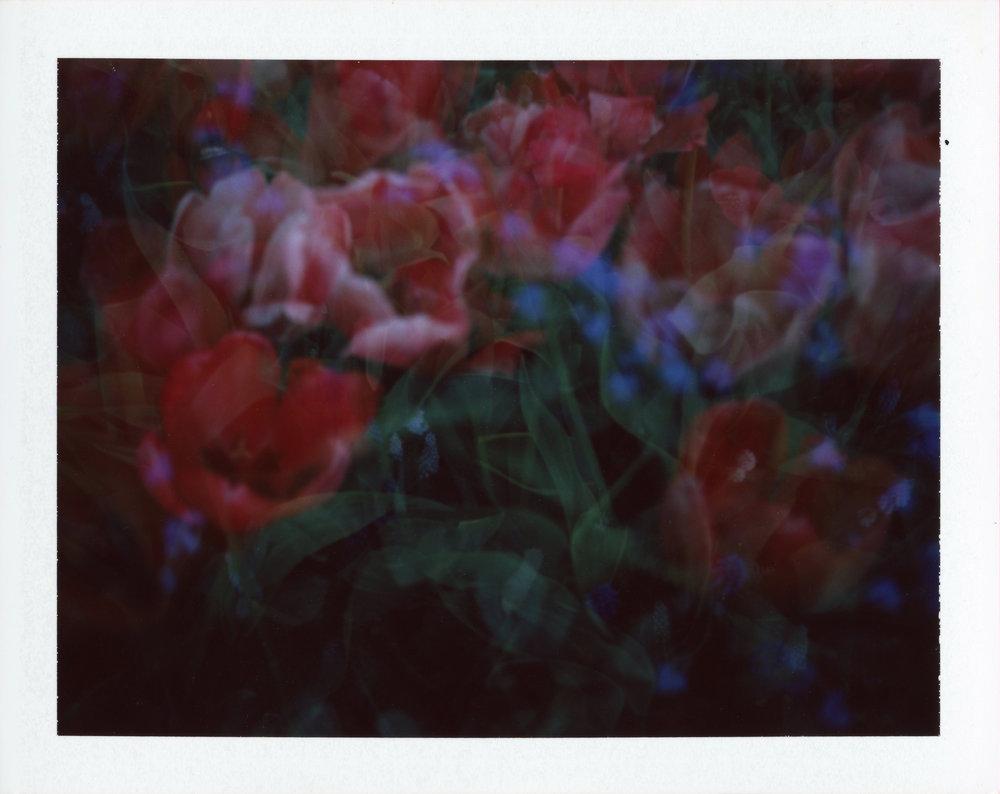 2018-flowers-red-2-edited.jpg