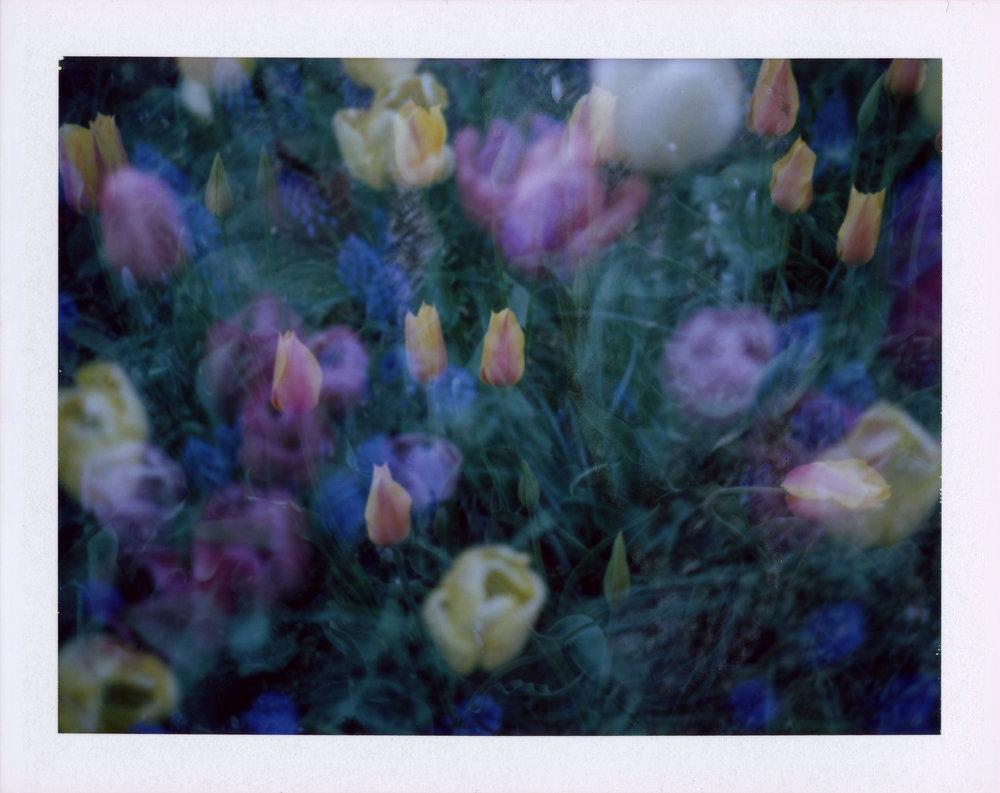 2018-flowers-tulips-edited.jpg