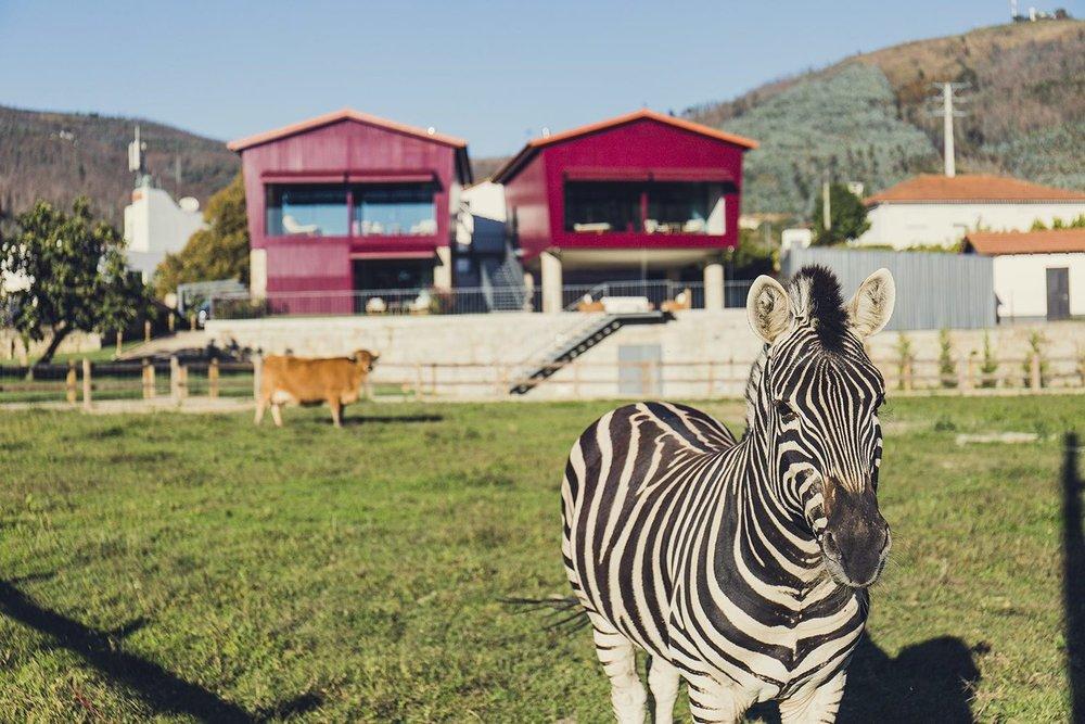 Quinta_05_Zebra.jpg