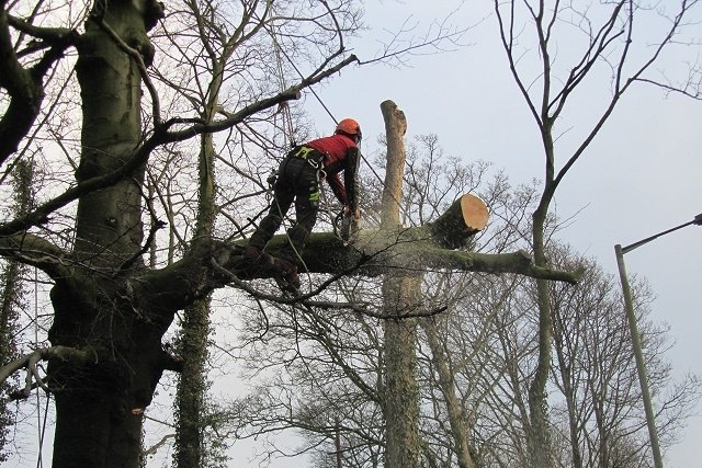 Pruning and Removal of Trees - Cloud Landscapes Ltd provide expert tree care. Our tree specialists can take on any type of pruning or tree removal job.