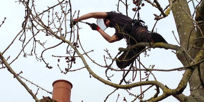Crown-Thinning tree surgery chichester.jpg