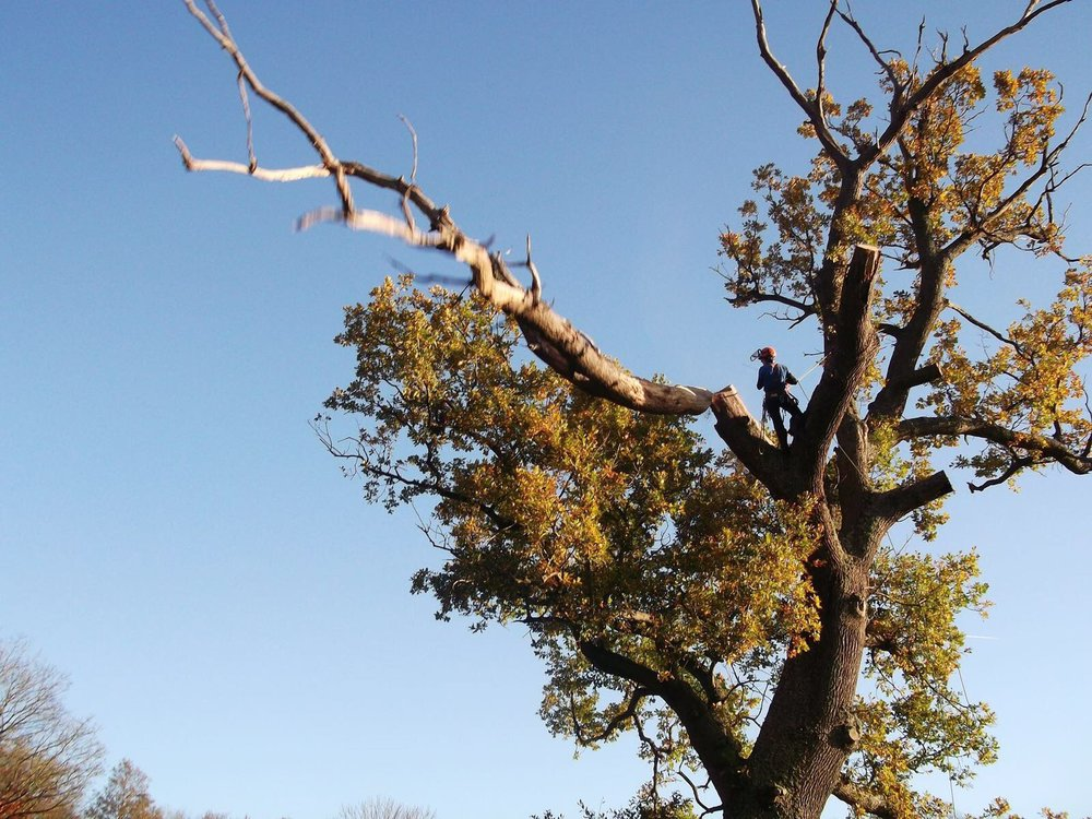 Chichester Tree Surgery Services.jpg