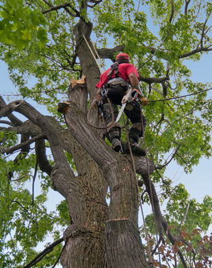 tree surgery chichester.jpg