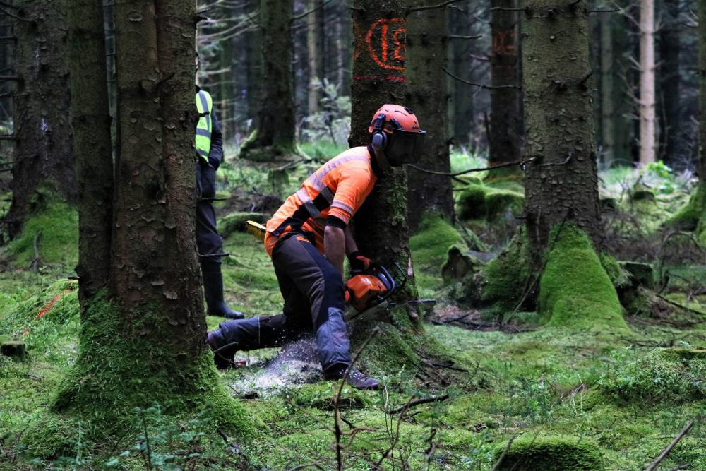 Chichester Tree Felling.JPG
