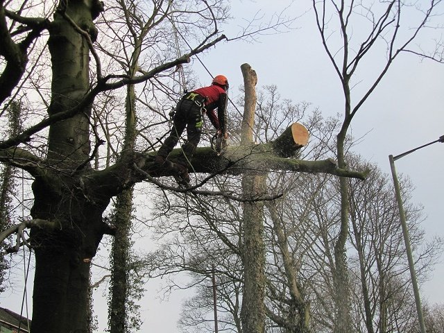 Pruning and Removal of Trees.jpg