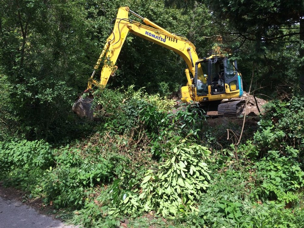 Tree & Vegetation Clearance chichester.jpg