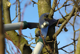 Tree Pruning - Expert tree care throughout Chichester.