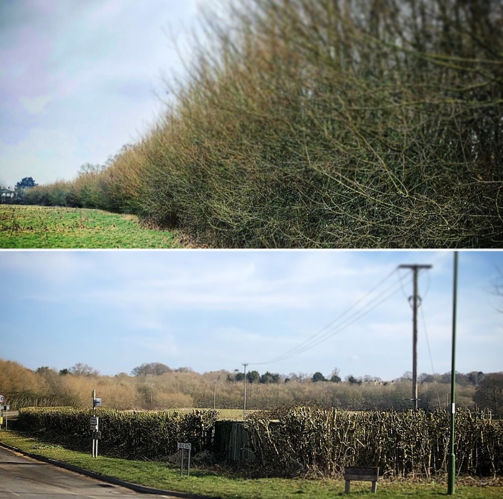 hedge cutting services chichester.jpg