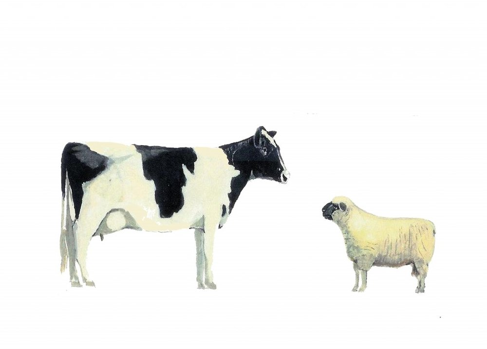 cow-and-sheep-copy1-1024x735.jpg