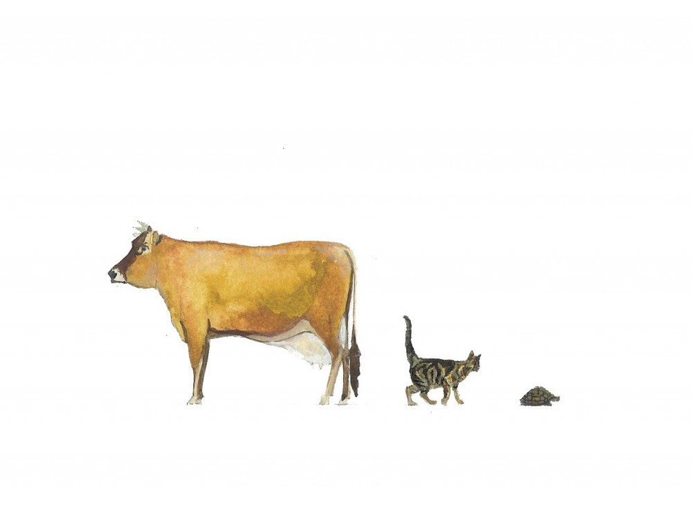 cow-cat-and-tortoise-copy-copy-21-1024x764.jpg