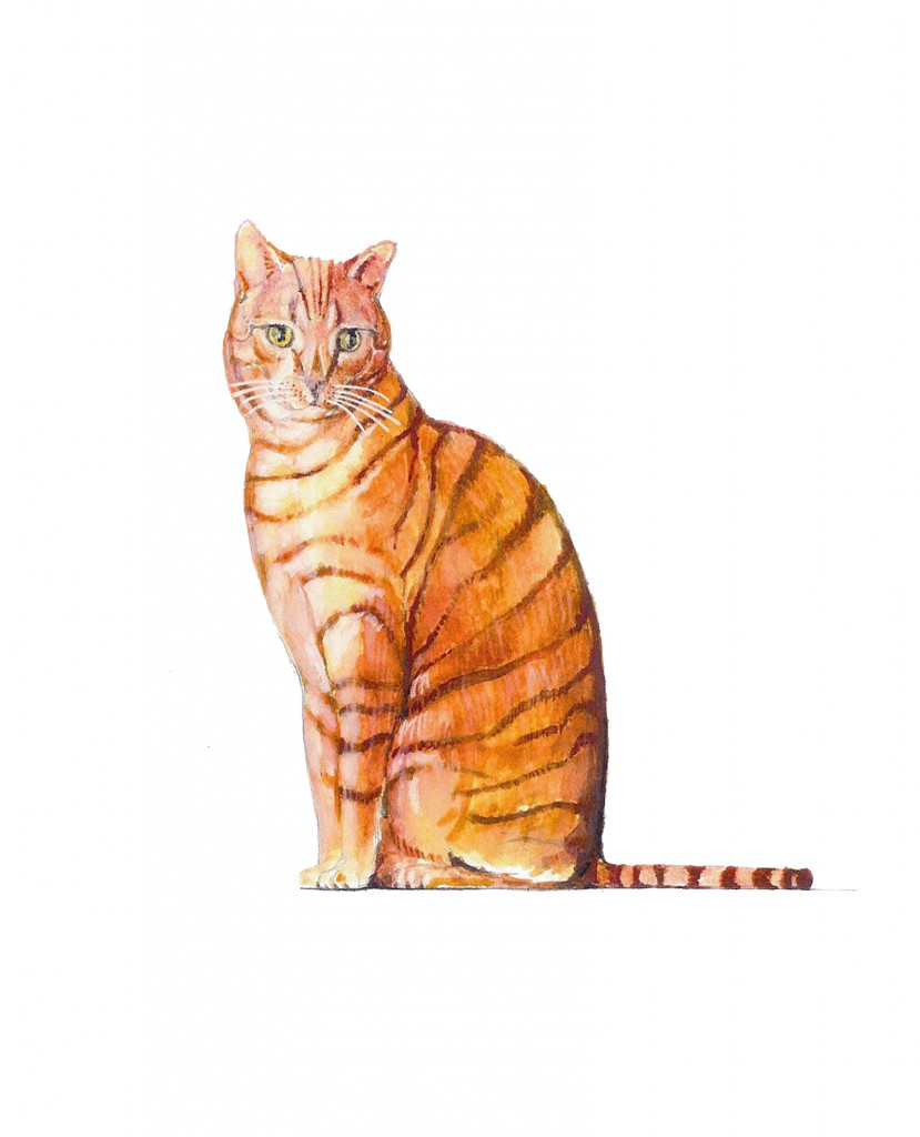 ginger-cat-copy-829x1024.jpg