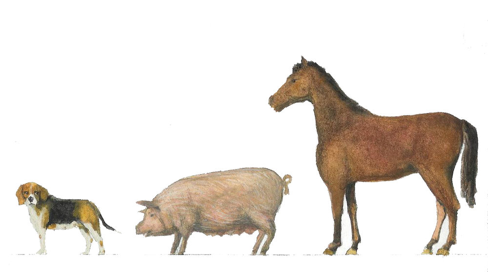 dog-pig-and-horse.jpg
