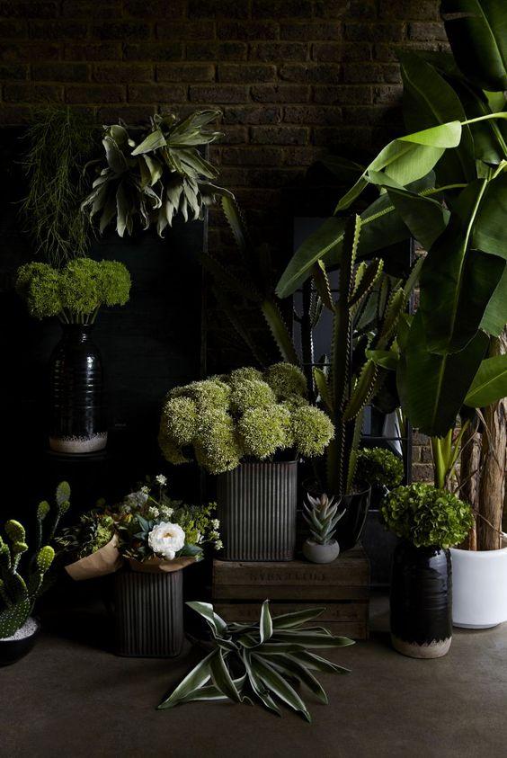 12/06/18 - Plants!