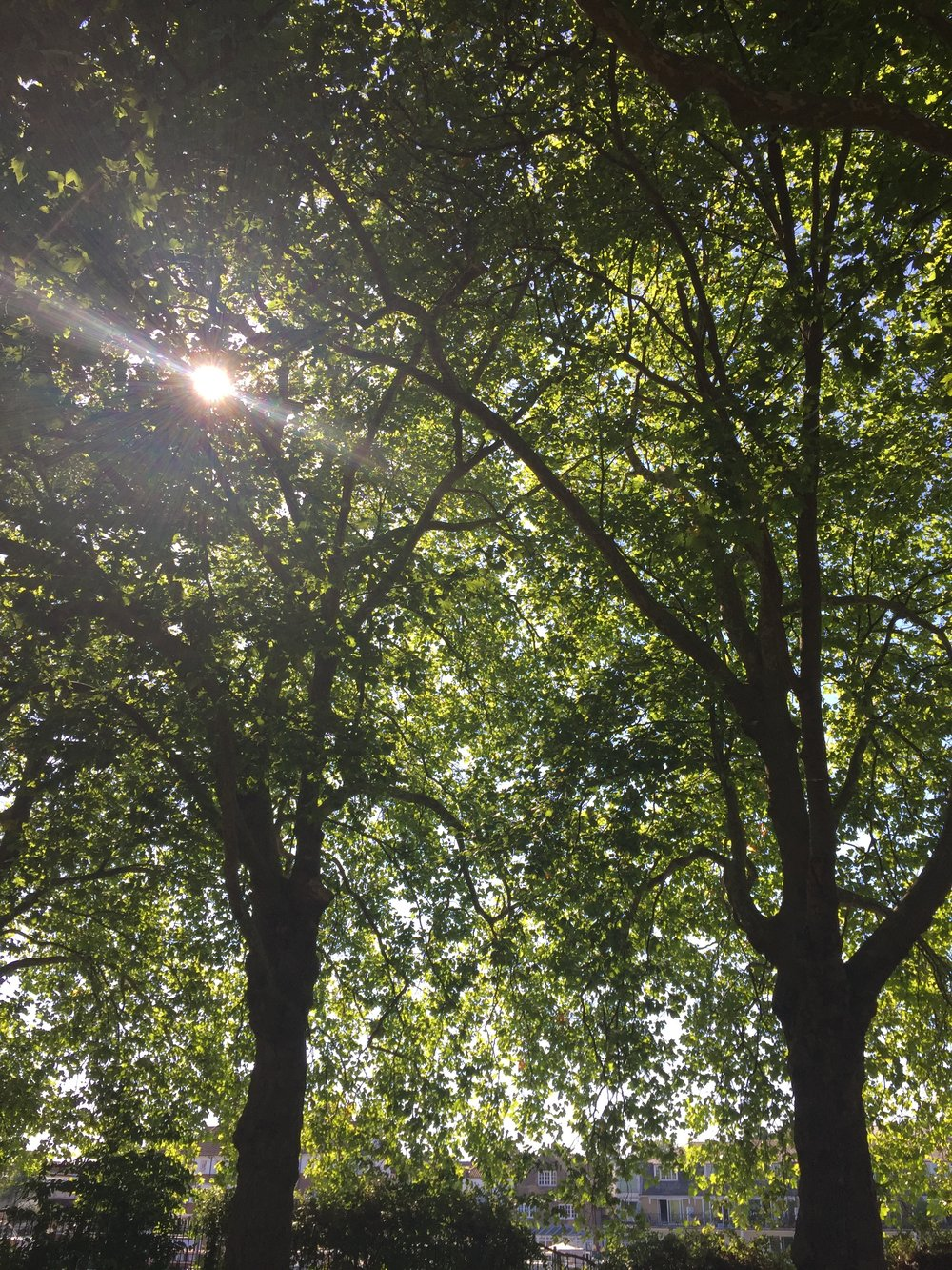 This photo was taken while having a picnic with my partner. I love the contrast with the sun behind the trees. The different shades of green shown as different parts were lit by the sun.