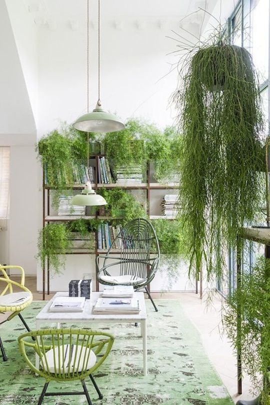 Although I do not like the chairs too much, I love the texture gained from the wild hanging plants in the foreground and all over the bookcase on the back wall.