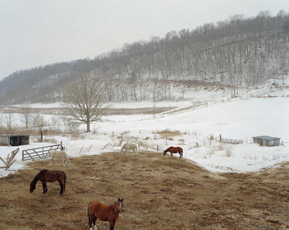horse_field_portfolio_final.jpg