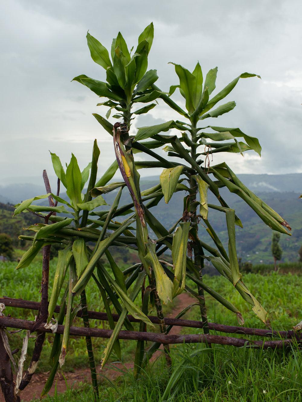 Fonerwa_Rwanda-4-24-14-0264-Edit.jpg