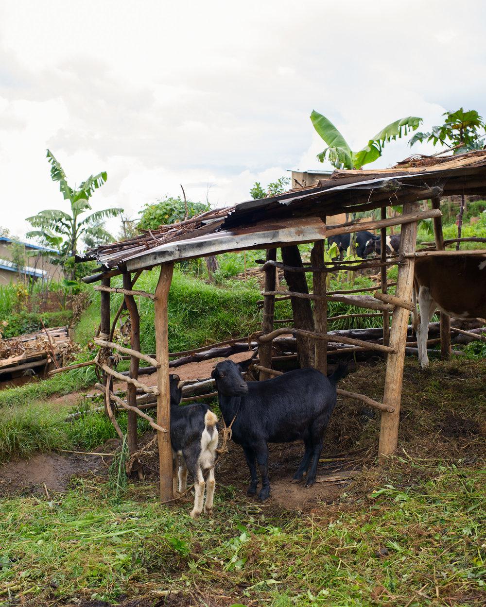 Fonerwa_Rwanda-4-24-14-0312.jpg