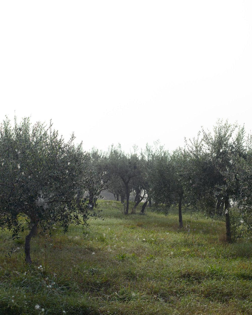 2014-Assisi-157.jpg