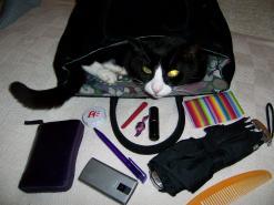 cat-in-handbag