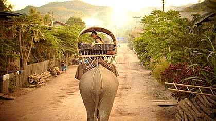Laos-Elephant-Trek-420x0.jpg
