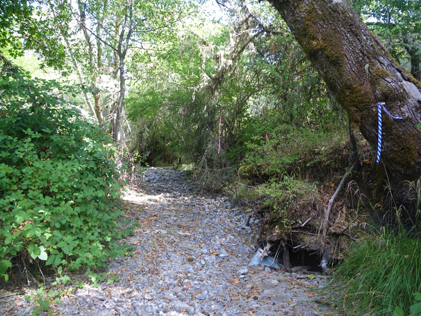 Bilger Creek Restoration