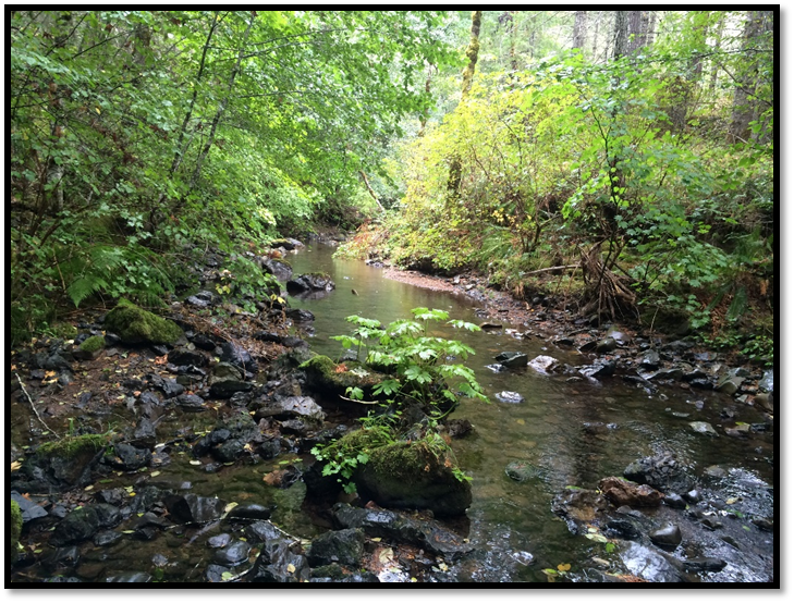 West Fork Cow Creek Restoration