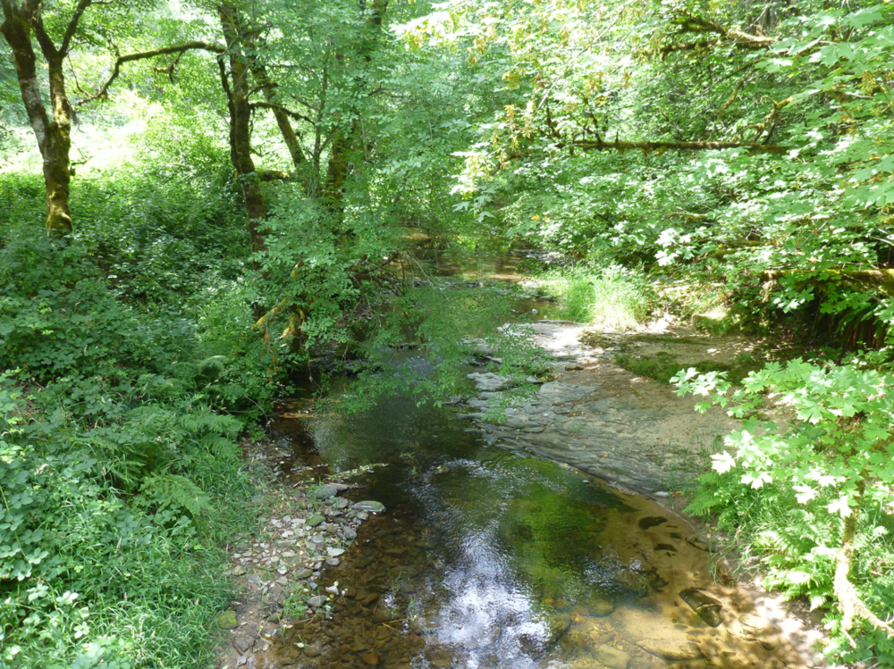 Brush Creek Restoration