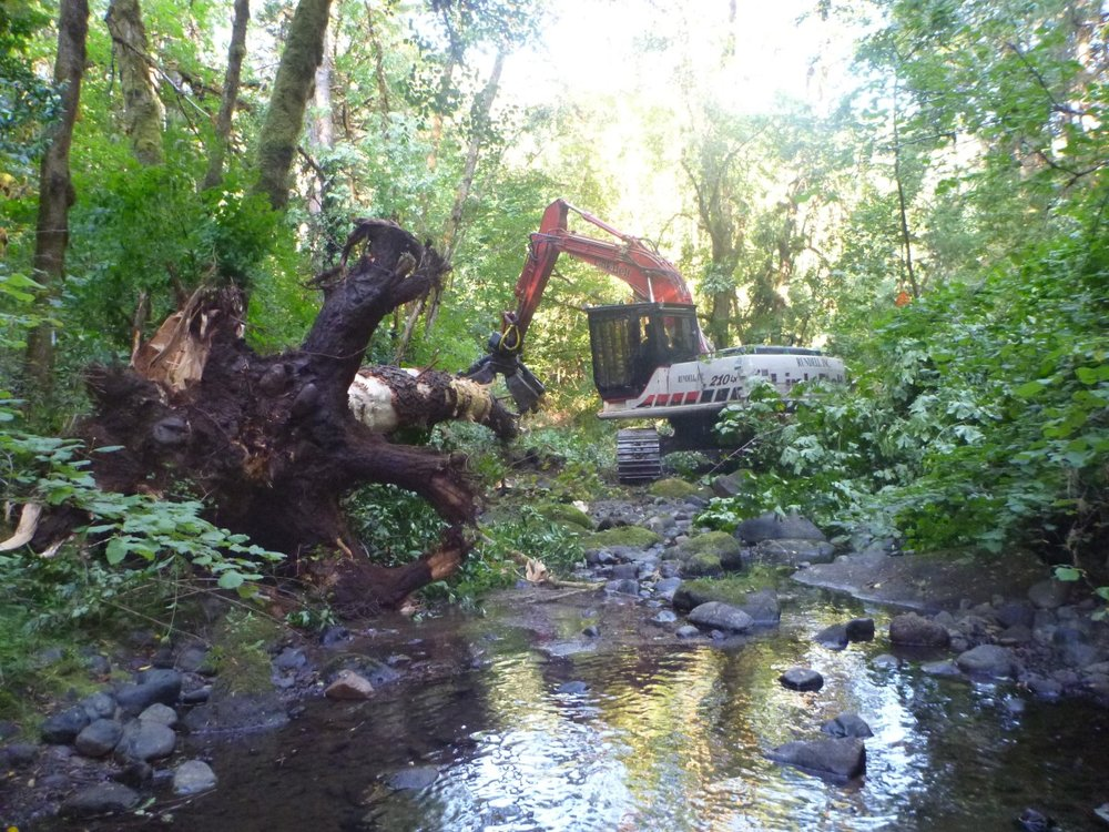 Thompson & Muns Creek Restoration